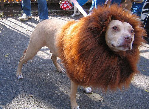 Lion or Dog :P