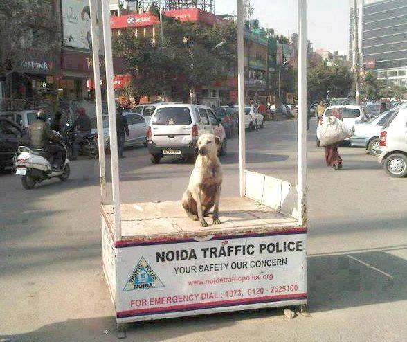 traffic police trolled :D